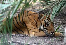 WWF: 60 Persen Hewan Vertebrata Punah dalam 44 Tahun Terakhir