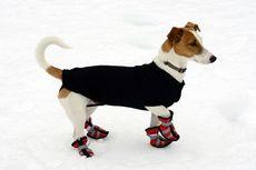 Cuaca Panas Landa Eropa, Anjing di Swiss Bakal Diberi Sepatu