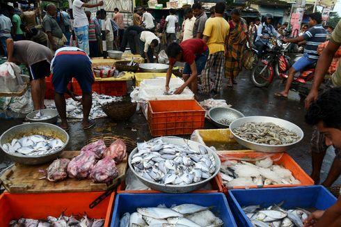 Hilang Satu Dekade, Hiu Langka Ditemukan di Pasar Ikan India