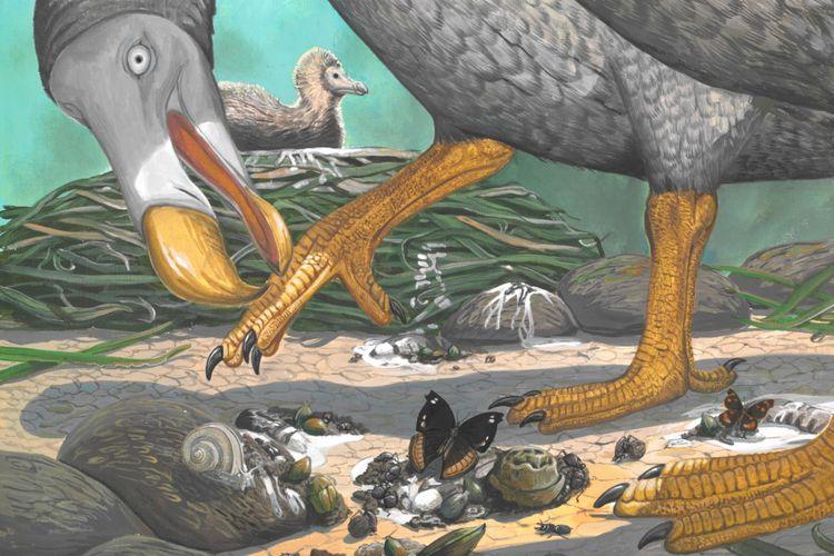 Lukisan burung dodo