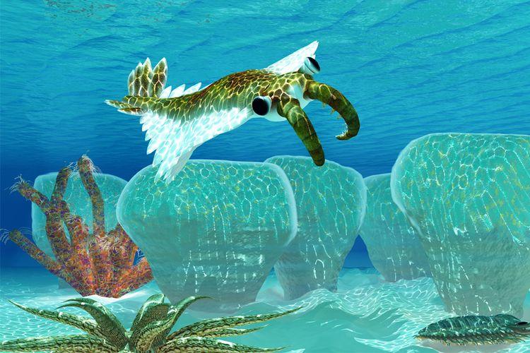 Anomalocaris, predator invertebrata yang muncul pada periode ledakan Cambrian
