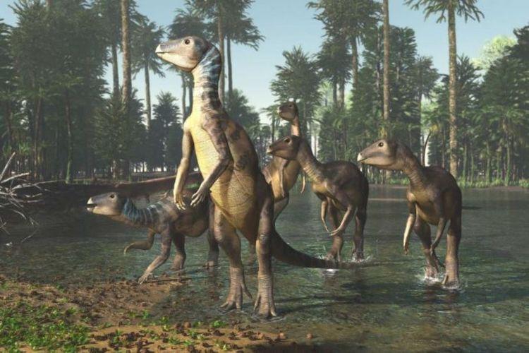 Ilustrasi penampakan Weewarrasauras pobeni, spesies dinosaurus baru dari zaman prasejarah yang ukurannya sebesar anjing kelpie.