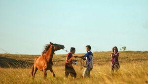 Mengenal Ikon dari Sumba Lewat Festival Kuda Sandalwood