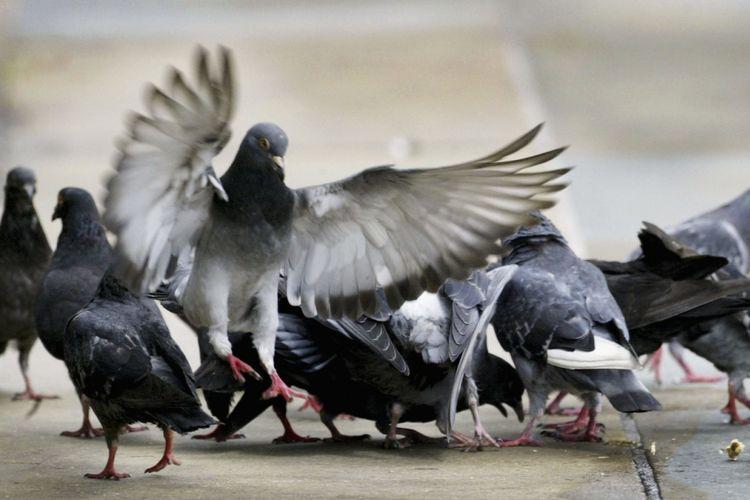Peneliti mengungkapkan sayap burung dapat memberi tanda bahaya.