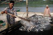 Tak Hanya Ikan Asin, Ada Beberapa Strategi Mengawetkan Ikan