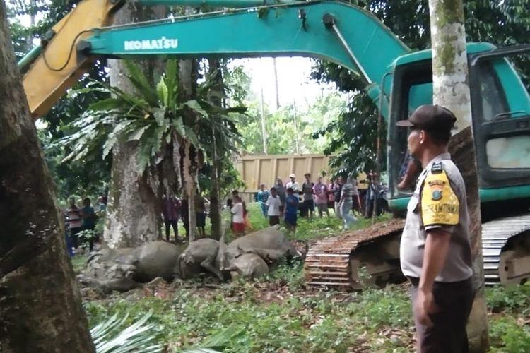 Sebanyak 19 ekor kerbau yang mati akibat disambar petir diangkat menggunakan alat berat dan dikubur dalam satu lubang di Desa Sawo Lamo yang tidak jauh dari lokasi kejadian di Desa Uratan, Andam Dewi, Tapanuli Tengah, Selasa (20/8//2019) sore.