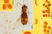 Terjebak di Batu Ambar 99 Juta Tahun, Kumbang Ini Ungkap Kisah Prasejarah