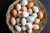 Penjelasan Soal Perbedaan Warna Telur...