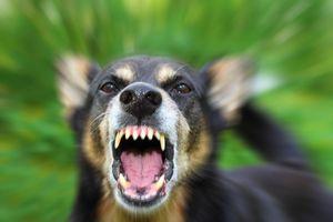 Anjing Gila Serang Puluhan Warga, Kolaka Utara Tetapkan Siaga 1 Rabies