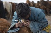 3000 Tahun Lalu Perawatan Gigi Kuda Sudah Dilakukan, Ini Buktinya