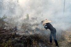 Jokowi: Kebakaran Hutan Turun Lebih dari 85 Persen Dibanding 2017