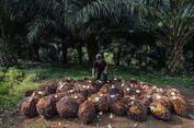 Minyak Sawit 'Dikerjai' Uni Eropa,  RI Ancam Bawa ke WTO