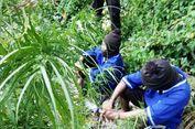 Ayah dan Anak Punya 4 Hektar Ladang Ganja di Belakang Rumahnya