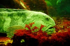 5 Jenis Ikan yang Namanya Berpadu dengan Hewan Lain...