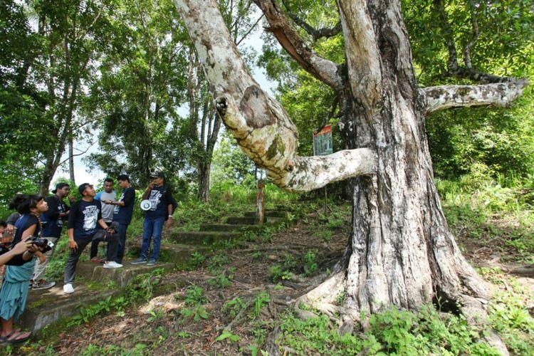Pohon cengkeh tua yang disebut afu dan berusia 300-400 tahun di Ternate ini masih menghasilkan buah. Tim dari Terios 7-Wonders mendapatinya langsung di tengah perkebunan yang juga masih dikelola dengan usia yang sama.