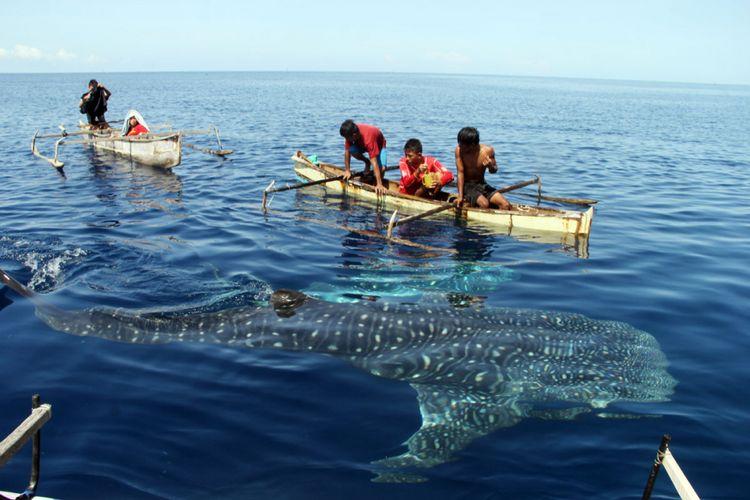 Anak-anak nelayan bermain denagn hiu paus di pantai Botutonuo, Kabupaten Bone Bolango.
