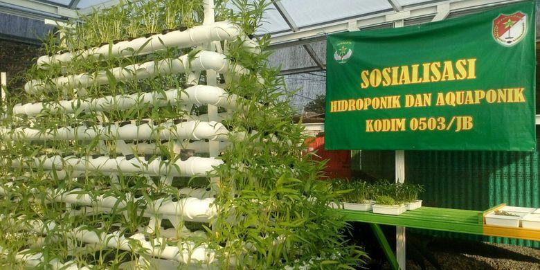 Kebun Hidroponik Di Tengah Megahnya Gedung Kawasan Jakarta