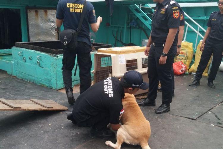 Salah satu K9 dari Bea Cukai Batam saat akan melakukan pencarian narkotika di Kapal MV Win Long.