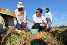 Ekspor Bawang Merah ke 6 Negara, Indonesia Lakukan Serangan Balik
