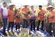 Menteri BUMN Serap Gabah 4.700 Ton di Garut