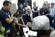 Petugas Bandara Adisutjipto Gagalkan Penyelundupan 7.040 Ekor Kuda Laut Kering