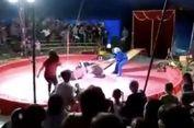 Bosan Dicambuk, Beruang Sirkus Serang Pawangnya