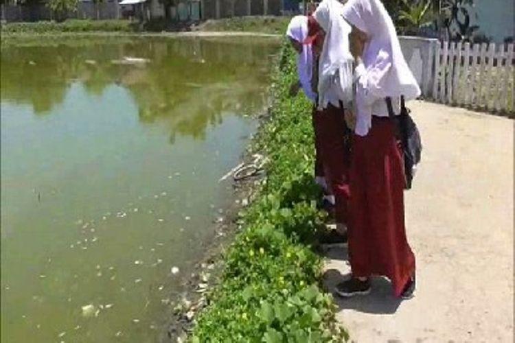 Bau busuk bangkai ribuan ekor ikan tambak mati mengganggu aktifitas warga dan siswa sekolah di Polewali mandar sulawesi barat