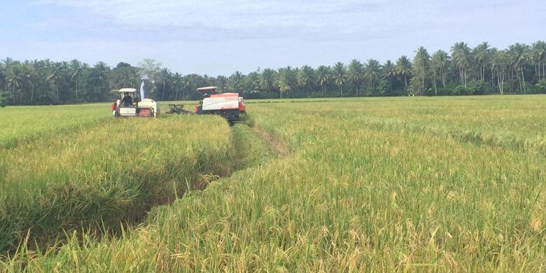 Data terbaru menunjukan luas lahan bahan baku sawah pada 2018 mencapai 7,1 juta hektar. Angka tersebut mengalami penurunan sekitar 635 ribu hektar.