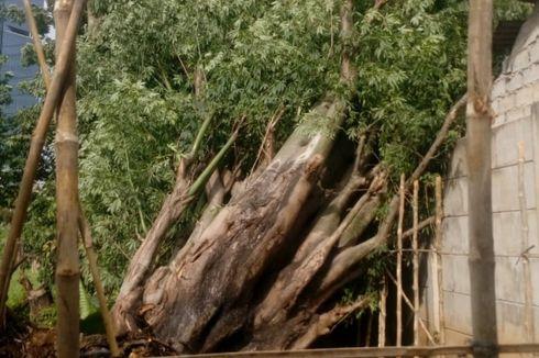 Angin Kencang, Pohon Tumbang Timpa Rumah di Jakarta Barat