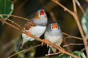 Ilmuwan Ujikan 2 Metode Belajar Burung, Ini Penjelasannya