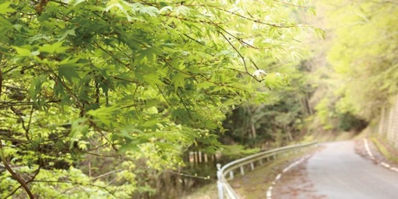 jalan pegunungan dengan pepohonan yang lebat di sepanjang jalan