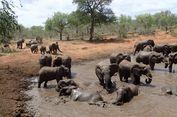 Gen Zombie, Alasan di Balik Imunitas Gajah dari Kanker