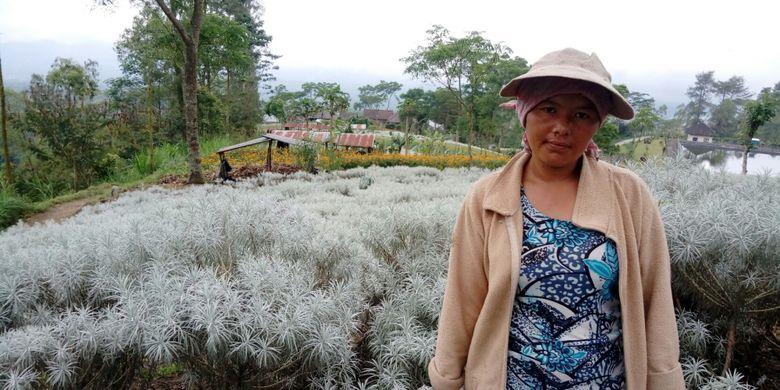 Nengah, seorang petani Bunga Kasna di Karangasem Bali