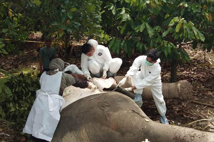 Badan Konservasi Sumber Daya Alam (BKSDA) Provinsi Aceh melakukan otopsi bangkai gajah di Desa Cikembun, Kecamatan Peureulak, Kabupaten Aceh Timur, Jumat (10/8/2018).
