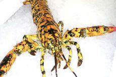 Lobster Langka Ini Ditemukan di Pasar Ikan