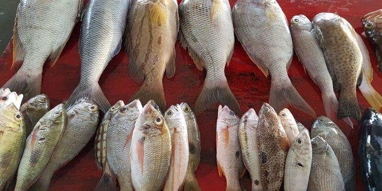 Berbagai jenis ikan hasil tangkapan nelayan Saumlaki