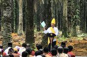 Lihat Pohon Sawit Tua di Riau, Jokowi Minta Peremajaan Segera