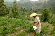 Jumlah Terbatas, Kementan Minta Petani Memaksimalkan Pupuk Subsidi