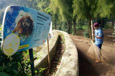 Pelempar Rokok ke Orangutan Disanksi Jadi Petugas Kebersihan