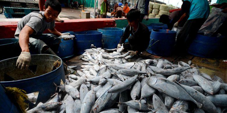 Bongkar Hasil Tangkapan - Pekerja membongkar ikan cakalang hasil tangkapan sebuah kapal penangkap ikan samudera di Pelabuhan Perikanan Samudera Nizam Zachman, Muara Baru, Jakarta, Rabu (5/2/2014). Ikan-ikan tersebut delanjutnya dibawa ke pabrik pengolahan ikan untuk sebelum diekspor dalam bentuk olahan.