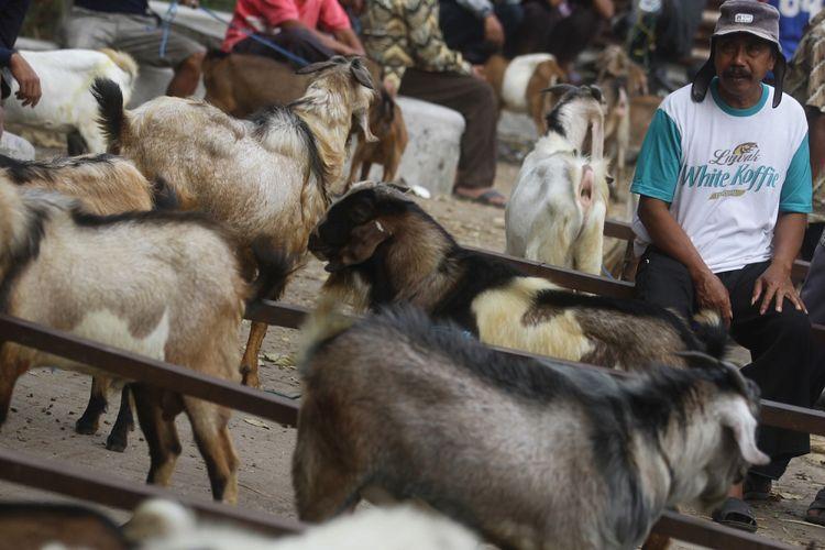 Peternak menawarkan kambing miliknya kepada pedagang hewan kurban yang mulai berdatangan di Pasar Hewan, Ngawi, Jawa Timur, Rabu (9/8/2017). Pedagang hewan kurban tersebut berburu stok di pasar hewan dan peternak-peternak kambing rumahan untuk kemudian dijual lagi dengan harga lebih tinggi menjelang Idul Adha.