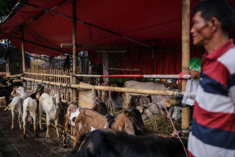 Pedagang kambing menjajakkan hewan kurban di trotoar Jalan KH Mas Mansyur, Tanah Abang, Jakarta Pusat, Kamis (31/8/2017). Meskipun telah dilarang oleh Pemerintah Provinsi DKI Jakarta untuk berjualan hewan kurban di atas trotoar, sejumlah pedagang masih terlihat menjajakannya di pinggir jalan dengan harga bervariasi mulai dari Rp 1,5 juta hingga Rp 8 juta.