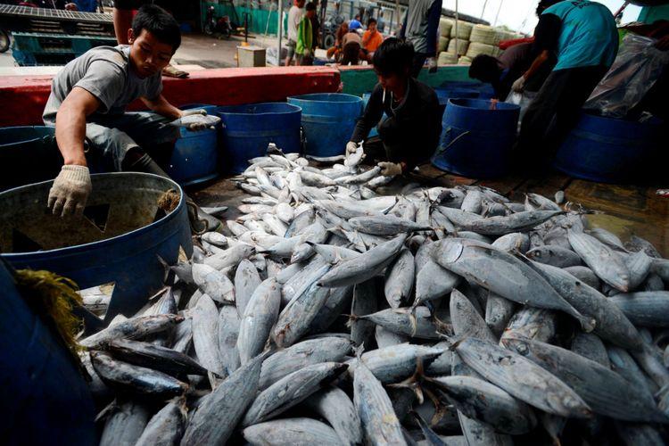 Kenaikan Nilai Ekspor Produk Perikanan Ri Bukan Indikasi Kebangkitan