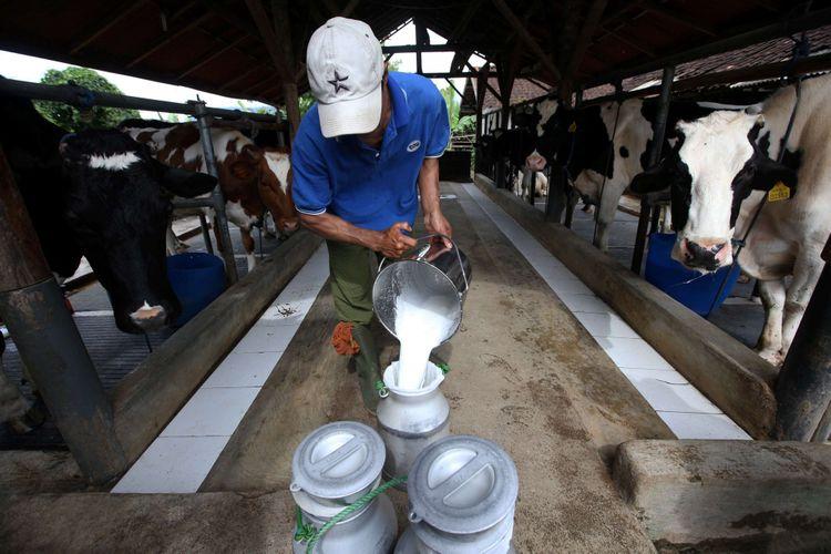 Peternak menuang susu sapi di peternakannya di Pangalengan, Bandung, Jawa Barat, Kamis (25/1/2018).