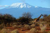 Pemasangan Kereta Gantung di Gunung Kilimanjaro Tuai Protes