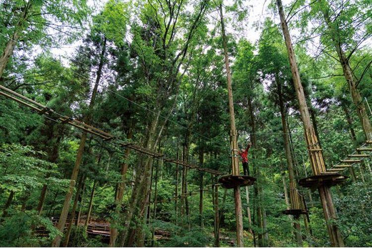 Forest Adventure Beppu