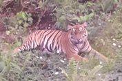 Petani di Sumsel Tewas Diterkam Harimau