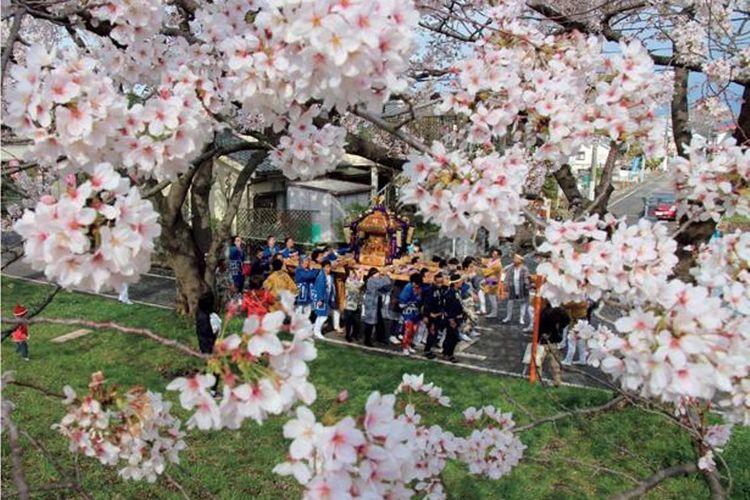 Fussa Sakura Namiki