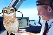 Main Snapchat di Tengah Penerbangan, 2 Pilot EasyJet Dihukum