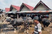 Pasar Bolu dan Transaksi Jual Beli Kerbau di Toraja